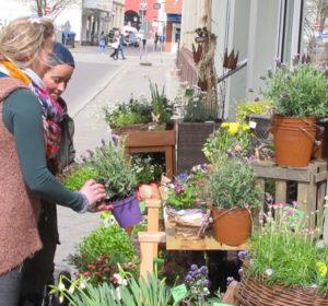 Die reiche Blütenpracht vor dem BlütenReich ist wichtig, um Kunden in die Nebenstraße zu locken. Foto: Grit Gehlen