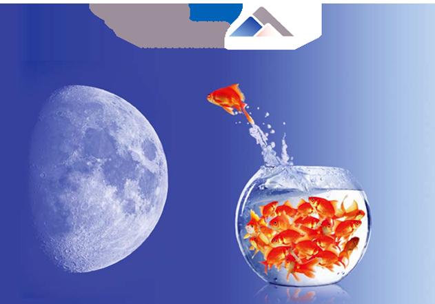 OECD LEED