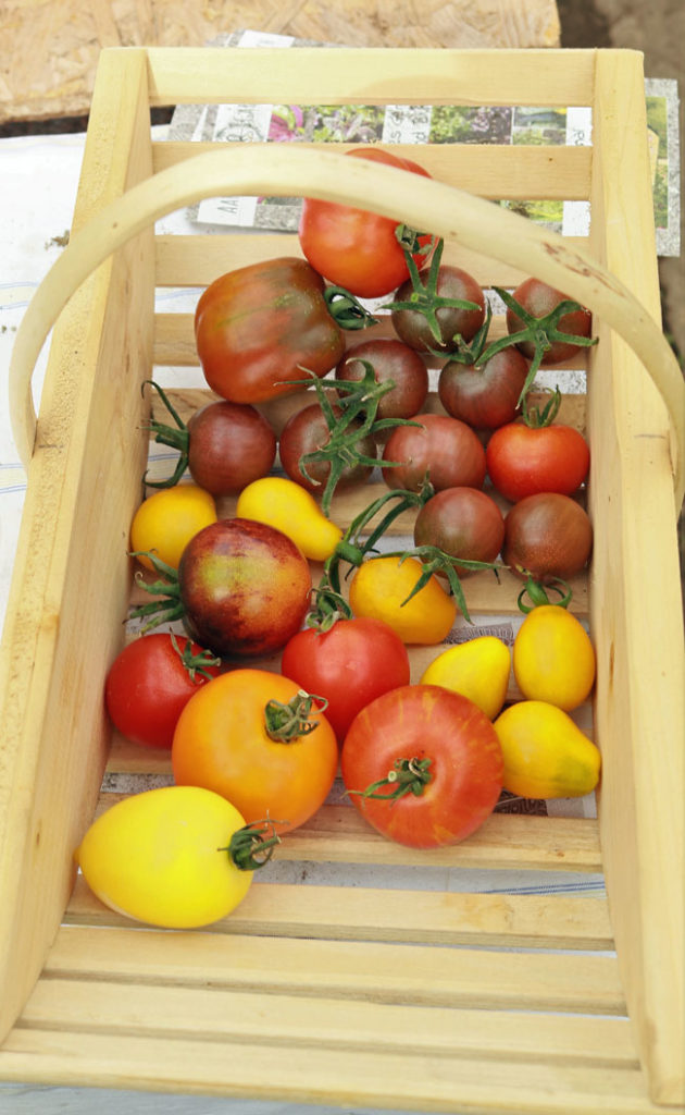 Woher Kommt Die Tomate