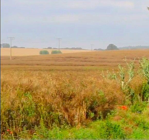Agrarantrag Mv
