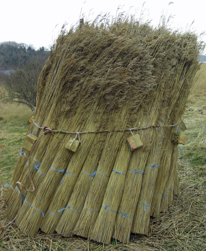 Schilf oder Reet ist ein traditioneller Baustoff, dessen Verwendung schon seit der Jungsteinzeit belegt ist. Foto: Ralph Schipke