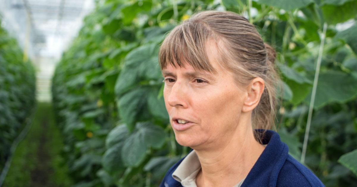 Ralph Schipke | Sabine Kabath und ihr Co-Geschäftsführer Holger Kasdorf setzten von Anfang an in der Watzkendorfer Gärtnerei auf Bio-Qualität. Heute ist die Nachfrage aus Berlin und Brandenburg groß und die Mühen der ersten Jahre machen sich bezahlt.